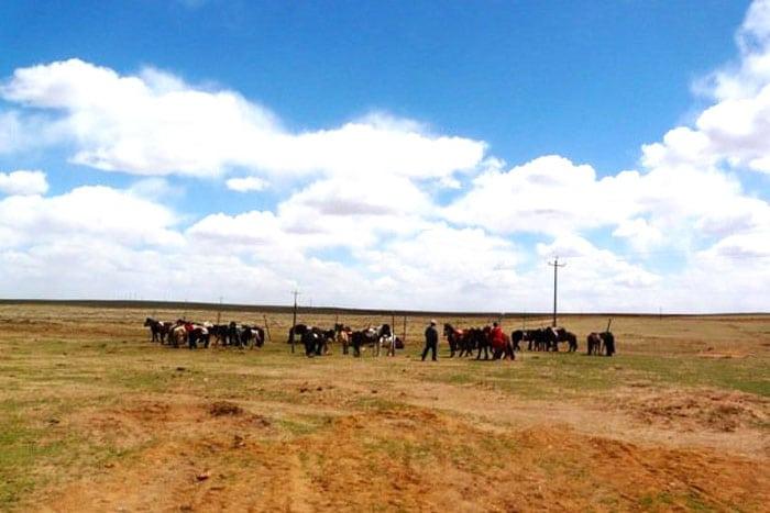 Horses in Xilamuren grasslands in Inner Mongolia