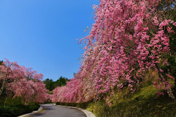 Miho Museum: Fairy tale and reality