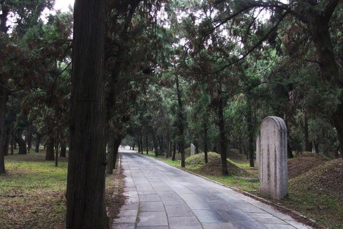 Confucius' Forest