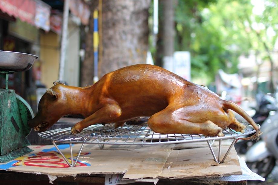 Carne de perro asada