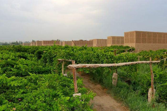 uvas de turpan