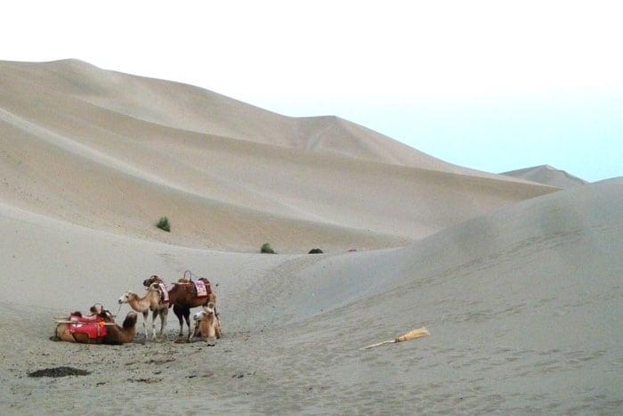 Camellos en Mingsha Shan