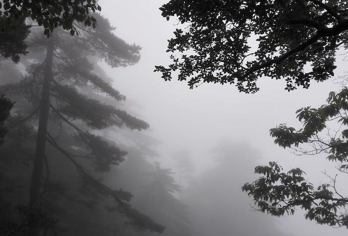 Niebla densa