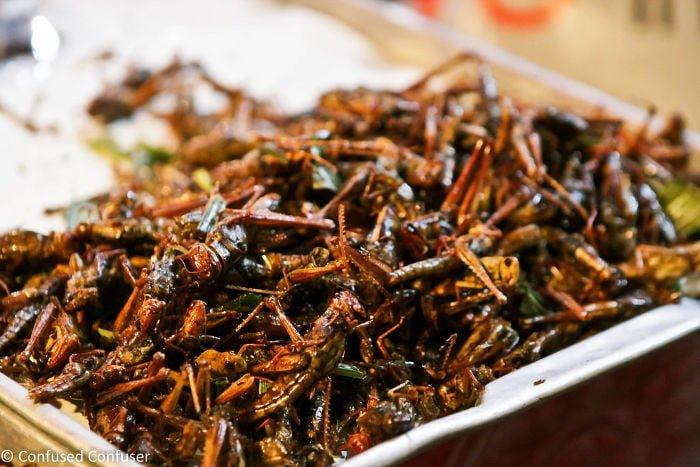 Insectos en Tailandia