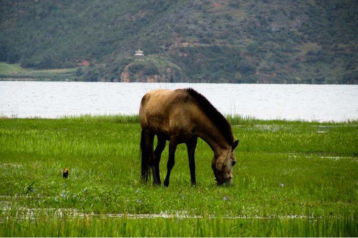arrivare al Lago Lugu