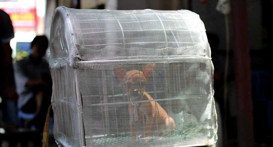 carne di cane, vietnam