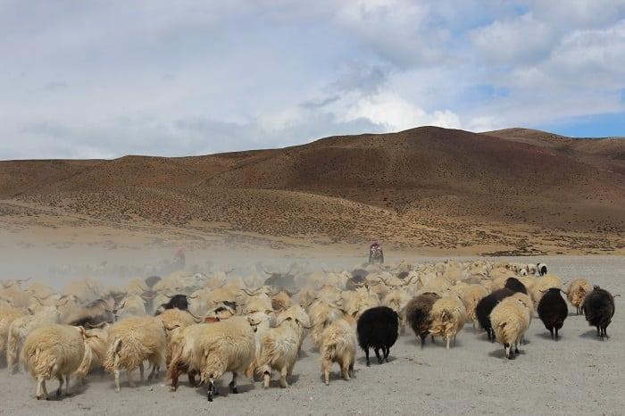 Panorama sul Kailash Kora