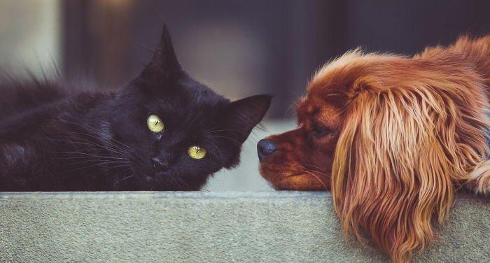 Servizi di pet-sitter